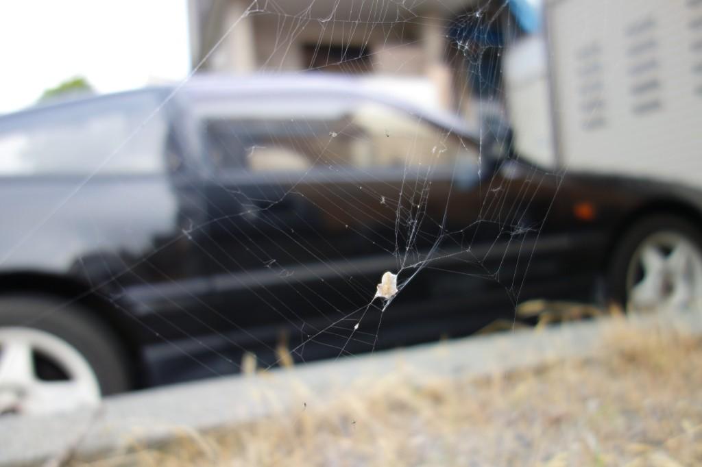蜘蛛 10.4mm(28mm@35mm) ISO125 1/800 f1.8